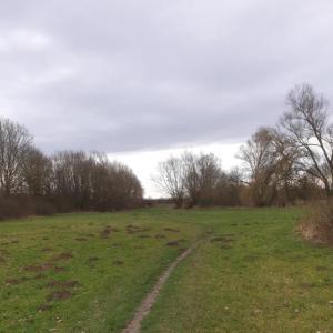 Wiese gegenüber der staumauer am Lippesee